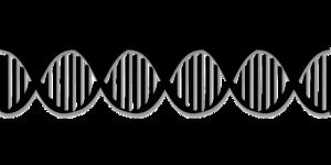 Gener kan gøre mænd ufrugtbare
