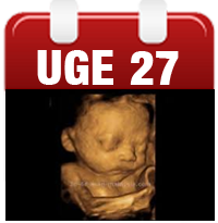 Gravid uge 27