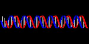Dominante og recessive gener