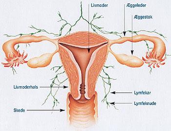 cyste på æggestok graviditet