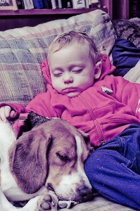 Kan jeg have hund og baby samtidig?