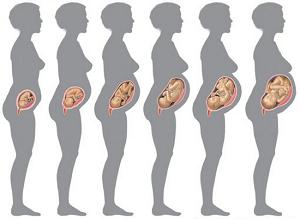 store babser hvornår på måneden kan man blive gravid