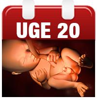 kønnet på barnet hvornår samleje efter graviditet
