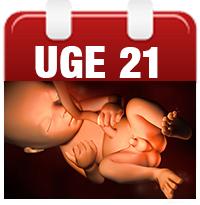 fæces i skeden maven efter fødslen