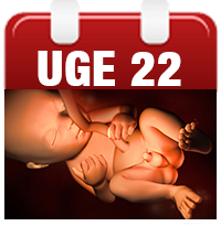 graviditet uge 22